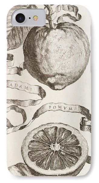 Adam's Apple IPhone Case by Cornelis Bloemaert