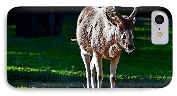 Addax IPhone Case