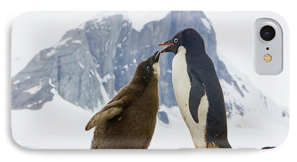 Adelie Penguin Chick Begging For Food IPhone 7 Case by Yva Momatiuk John Eastcott