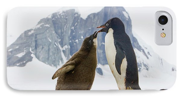 Adelie Penguin Chick Begging For Food IPhone Case by Yva Momatiuk John Eastcott