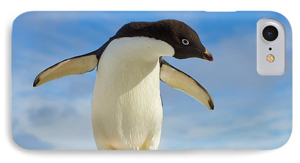 Adelie Penguin Flapping Wings Antarctica IPhone Case by Yva Momatiuk John Eastcott