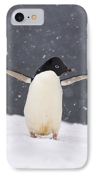 Adelie Penguin In Snowstorm IPhone Case by Steven Kazlowski