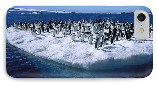 Adelie Penguins On Icefloe Antarctica Phone Case by Colin Monteath