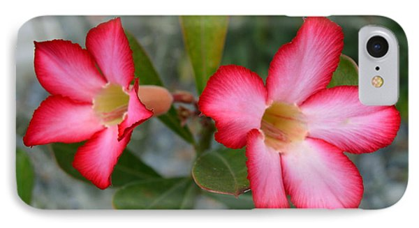 Adenium Flower IPhone Case by Doug Grey