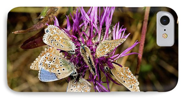Adonis Blue Butterflies On Knapweed IPhone Case by Bob Gibbons