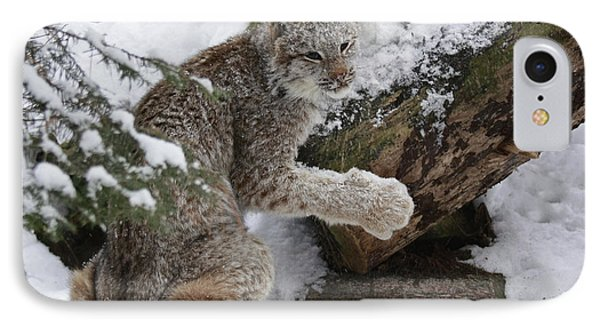 Adorable Baby Lynx In A Snowy Forest Phone Case by Inspired Nature Photography Fine Art Photography