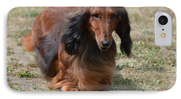 Adorable Long Haired Daschund Dog IPhone Case