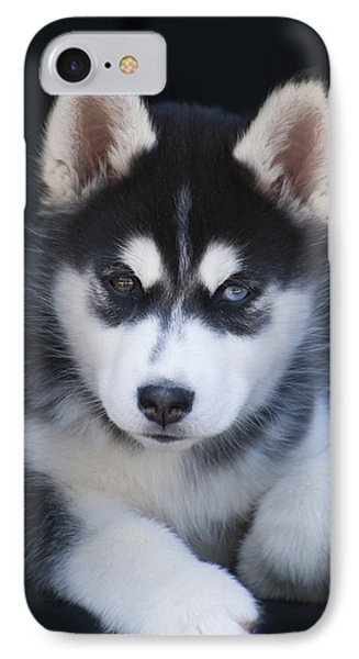 Adorable Siberian Husky Sled Dog Puppy IPhone Case