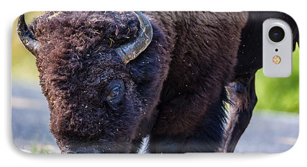 Adult Bison Staring IPhone Case by Andres Leon