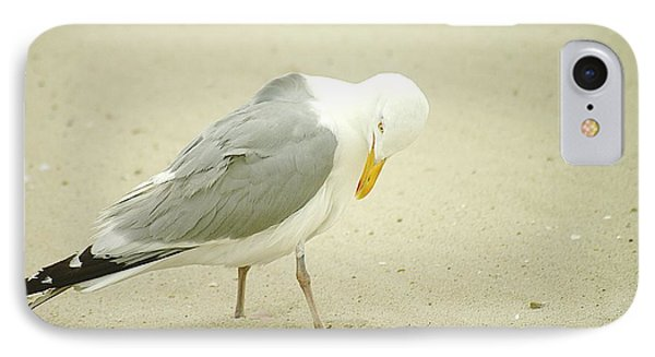 IPhone Case featuring the photograph Adult Seagull Preening by Suzanne Powers