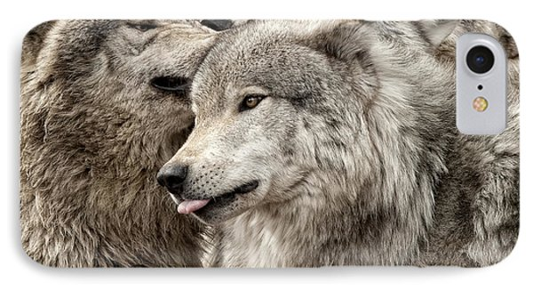 IPhone Case featuring the photograph Adult Timber Wolf by Wolves Only