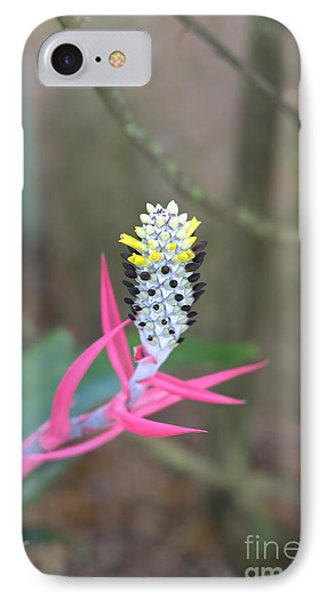 Aechmea Maculata  IPhone Case by Liane Wright