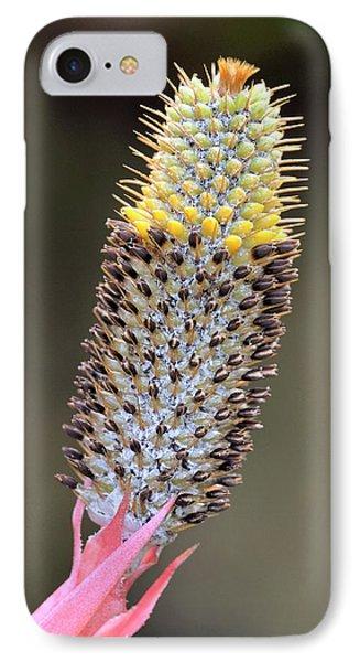 Aechmea Pineliana Flower IPhone Case by Bildagentur-online/mcphoto-schulz