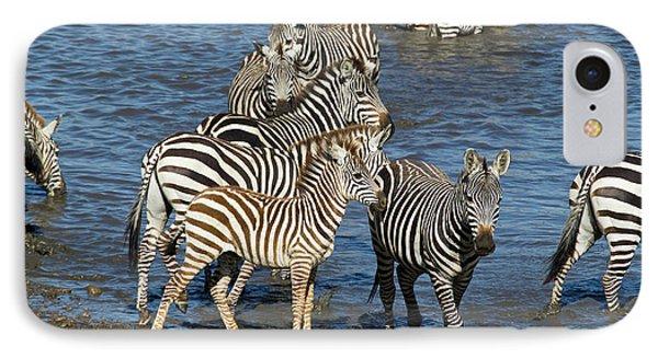 Africa, Tanzania, Serengeti National IPhone Case