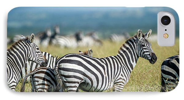 Africa, Tanzania, Zebras IPhone Case