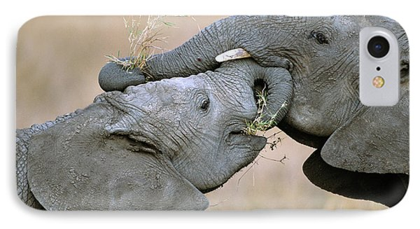 African Elephant Calves Playing  IPhone Case