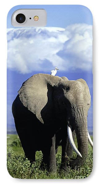 African Elephant IPhone Case by Daryl Balfour