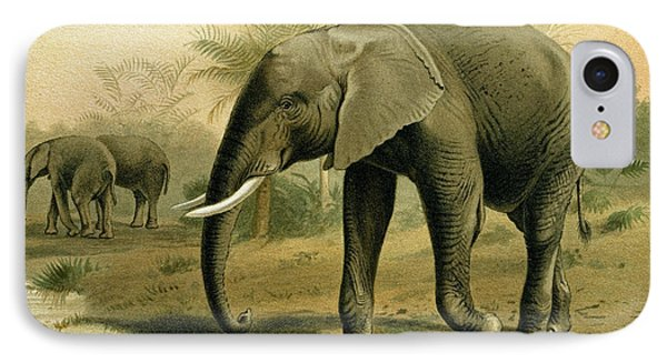 African Elephant IPhone Case by English School