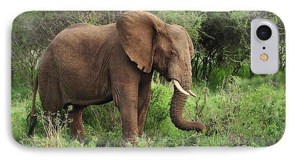 African Elephant Grazing Serengeti IPhone Case by Thomas Marent