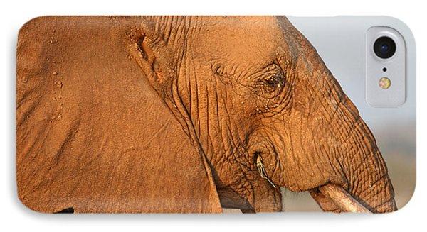 African Elephant Profile IPhone Case by Liz Leyden