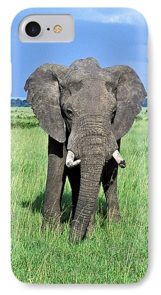 African Elephant IPhone Case by Tina Manley