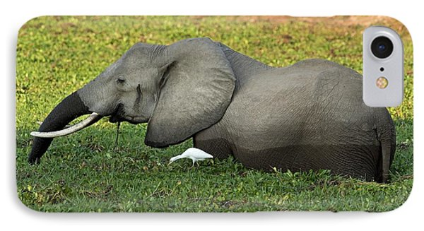 African Elephant With Cattle Egret IPhone Case by Tony Camacho