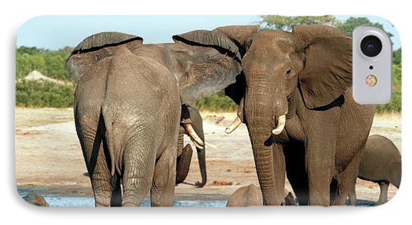 African Elephants IPhone Case by Gerry Pearce