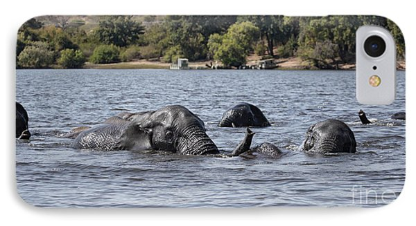 IPhone Case featuring the photograph African Elephants Swimming In The Chobe River by Liz Leyden
