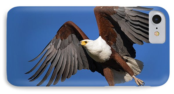 African Fish Eagle Phone Case by Johan Swanepoel