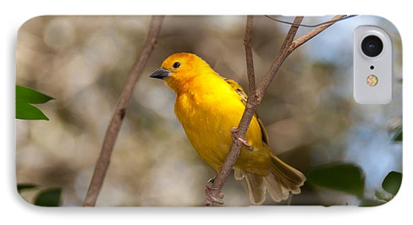 IPhone Case featuring the photograph African Golden Weaver by John Black
