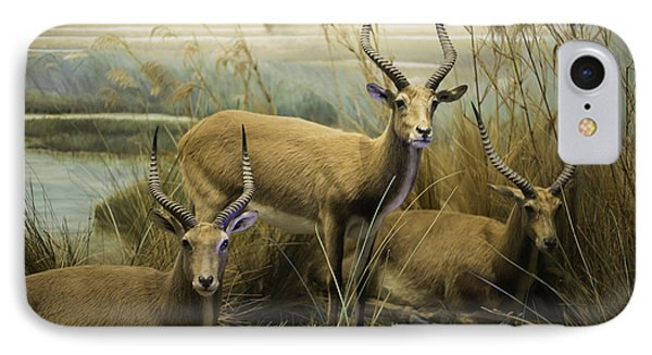 African Impalas Phone Case by Diego Re