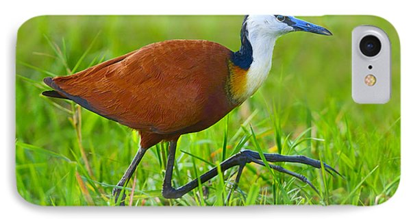 African Jacana Phone Case by Tony Beck