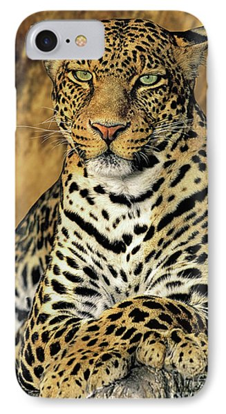 African Leopard Portrait Wildlife Rescue IPhone Case by Dave Welling