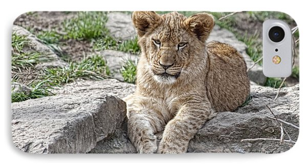 African Lion Cub IPhone Case by Tom Mc Nemar