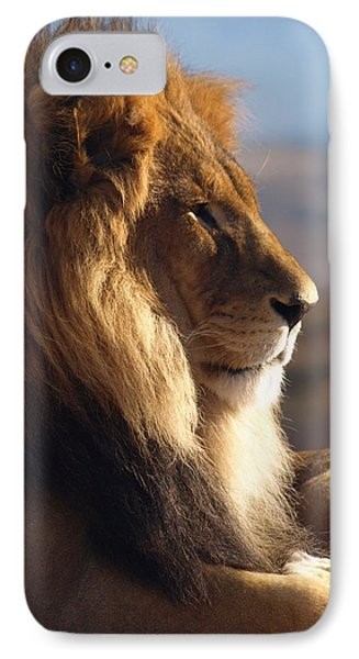 African Lion IPhone Case by James Peterson