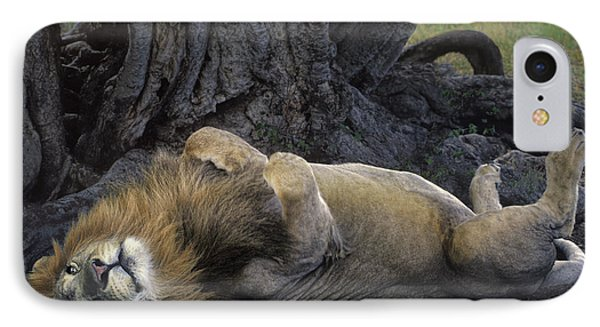 African Lion Panthera Leo Wild Kenya IPhone Case by Dave Welling