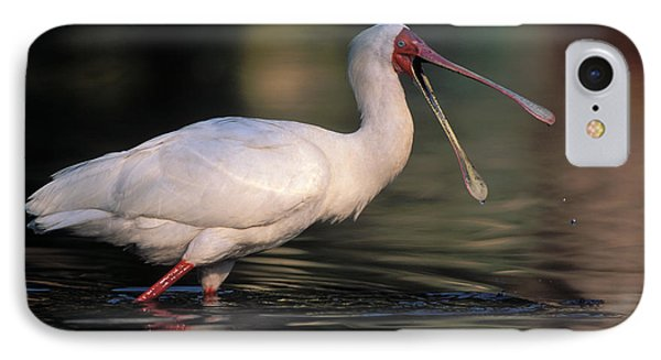 African Spoonbill IPhone 7 Case by Nigel Dennis