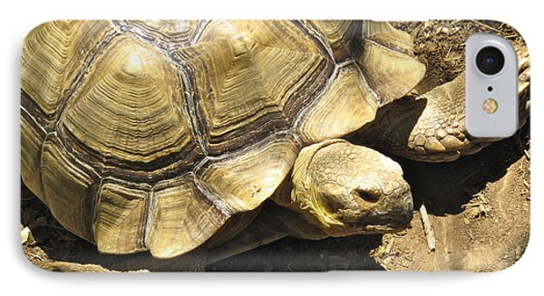 African Spurred Tortoise IPhone Case by CML Brown