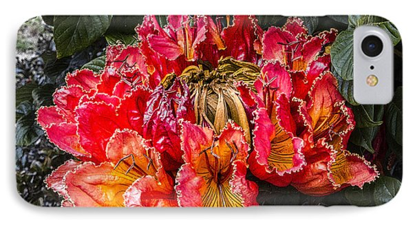 African Tulip Tree Flowers IPhone Case by Photographic Art by Russel Ray Photos