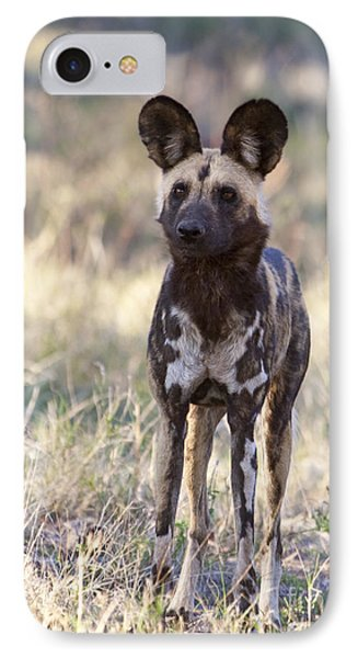 African Wild Dog  Lycaon Pictus IPhone Case by Liz Leyden