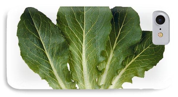 Agriculture - Baby Green Romaine Leaves IPhone Case by Ed Young