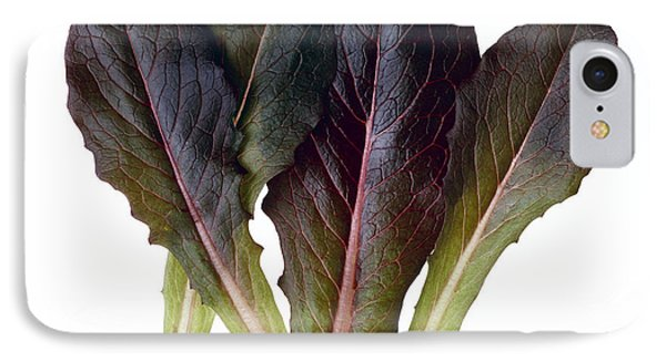 Agriculture - Baby Red Romaine Leaves IPhone Case by Ed Young