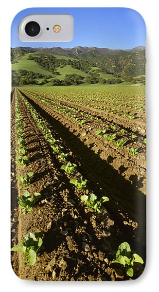 Agriculture - Field Of Early Growth IPhone Case by Ed Young