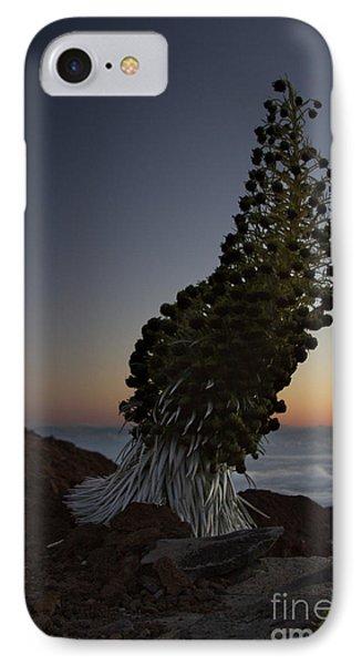 Ahinahina - Silversword - Argyroxiphium Sandwicense - Summit Haleakala Maui Hawaii Phone Case by Sharon Mau
