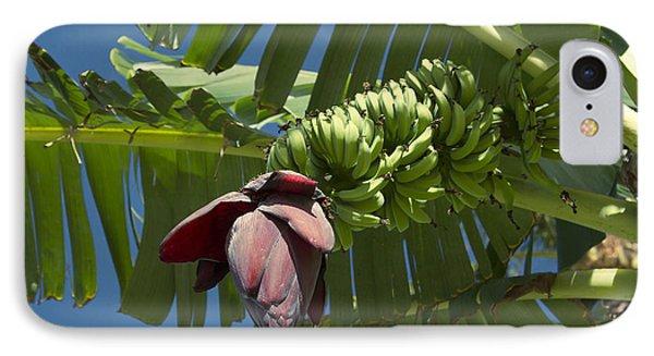 'ahui Mai'a O Wailea - Banana Flower IPhone Case by Sharon Mau