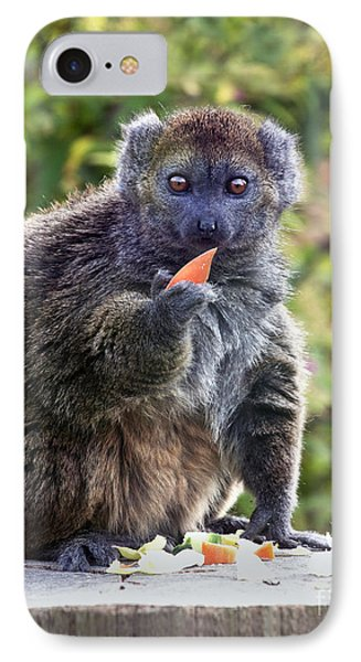 Alaotran Gentle Lemur IPhone Case by Terri Waters