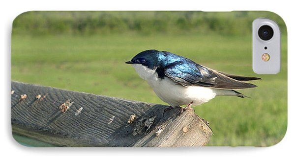 Alaskan Swallow IPhone Case by Dan Redmon