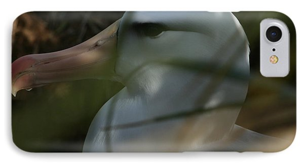 IPhone Case featuring the photograph Albatross by Amanda Stadther