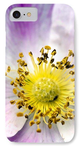 Alberta Wild Rose IPhone Case by Dee Cresswell