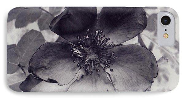 Alberta Wild Rose IPhone Case by Tlynn Brentnall